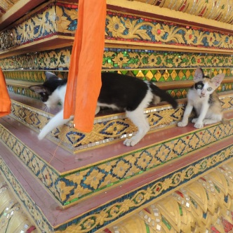 Temple kittens!