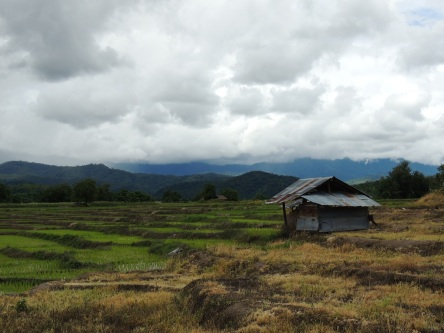 Fields after the rain in Pai, Thailand
