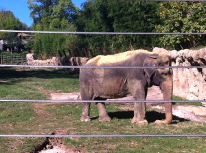 The new elephant area of the zoo finally opened, and it's really cool!
