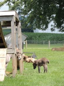 Baby donkey!!!