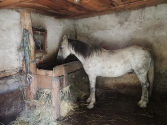 Boban the horse!