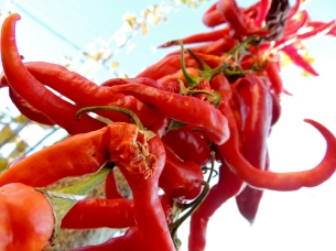 Drying peppers