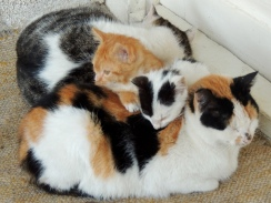 Kitty pile!!