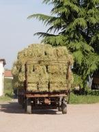 Alfalfa season