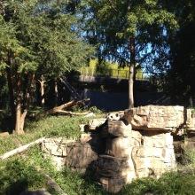 Panda morning naps
