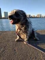 Windy city doggie