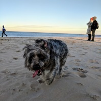 So much fun at the dog beach!