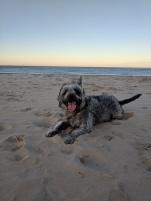 Too much fun at the dog beach!